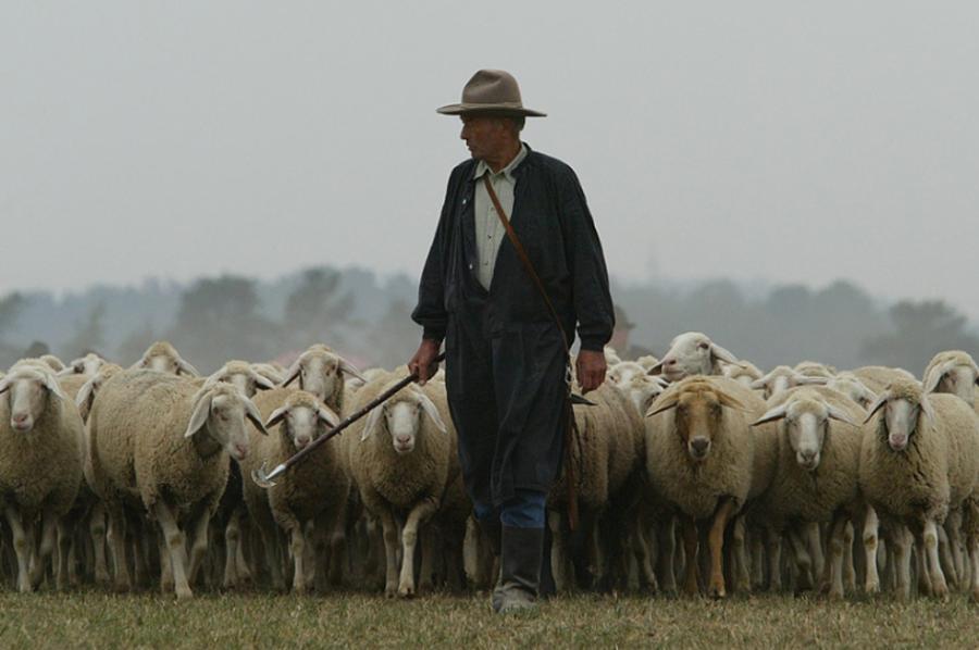 Hasil gambar untuk gambar gembala